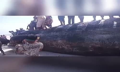 Samaki ambaye anasemekana ni jamii ya nyangumi amekutwa katika pwani ya Kilwa Mkoani Lindi